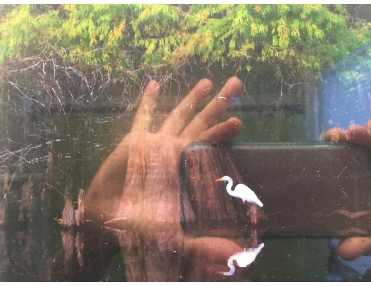 Great White Heron Selfie, original photo by Carol Kay, %22selfie%22 by Anda Peterson